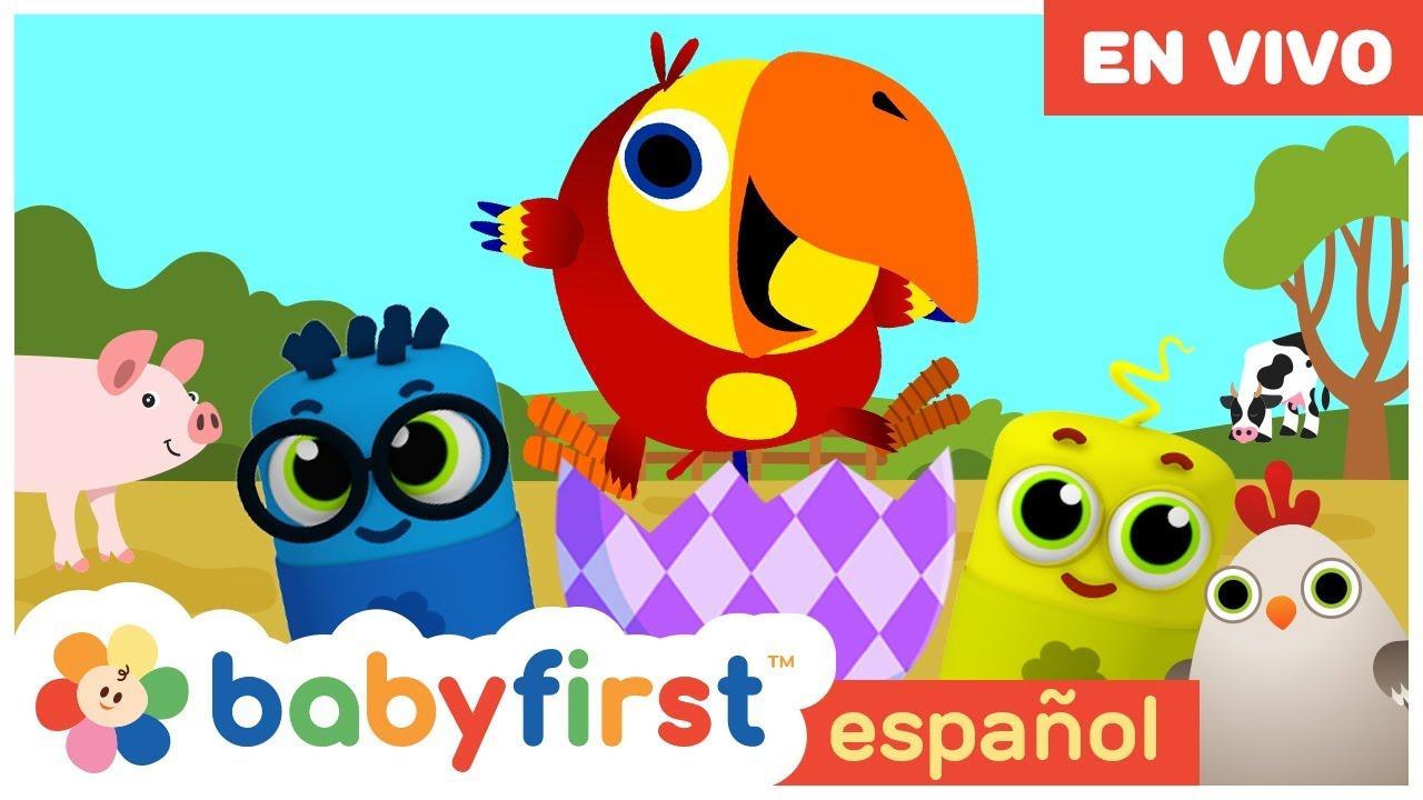 BabyFirstTV Español - Canciones Infantiles en español EN VIVO