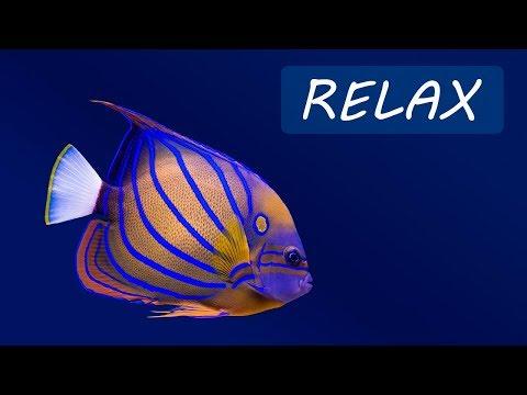 Música para relajarse y Acuario EN VIVO