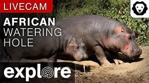Piscina de los Hipopotamos EN VIVO