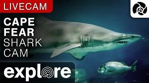 Tiburones EN VIVO - Shark Cam